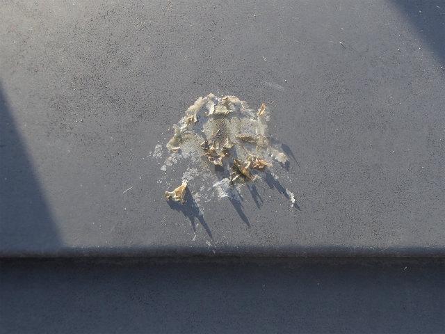 屋根塗装 鳥の糞
