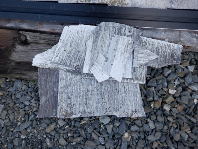 防藻試験 塗り板