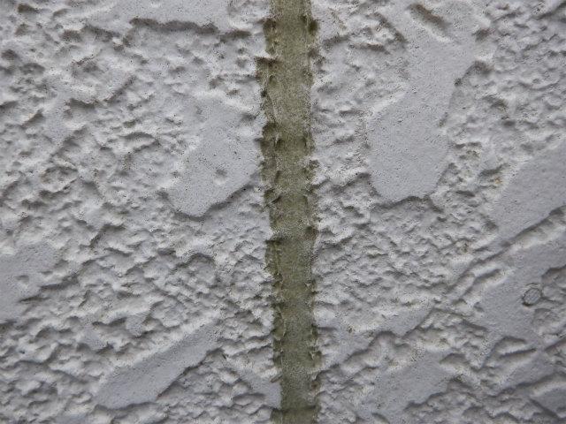 ブリード 藻 コ―キング